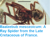 http://sciencythoughts.blogspot.co.uk/2015/12/baalzebub-mesozoicum-ray-spider-from.html