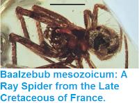 http://sciencythoughts.blogspot.co.uk/2015/12/baalzebub-mesozoicum-ray-spider-from.html
