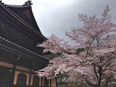 nanzenji sakura