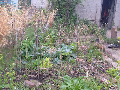 A row of pea sticks in a messy garden bed