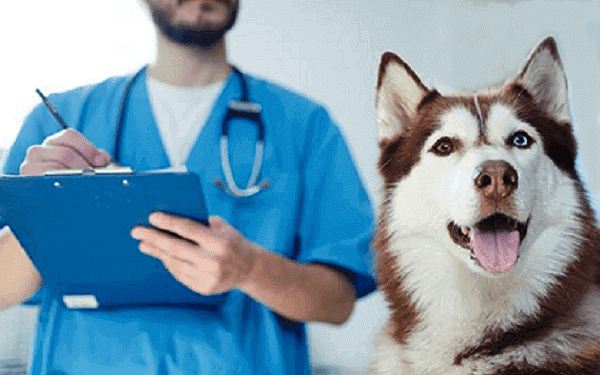 Canine Herpesvirus and Rabies Viral and Chlamydial Diseases ;Canine Parvovirus;Canine Coronavirus in dogs;Treatment is largely supportive;Canine Distemper breeding Canine herpesvirus;rabies;vaccine product
