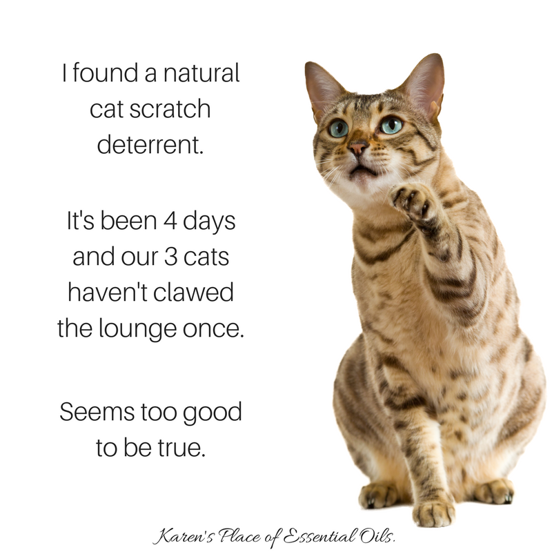 Essential Oils To Deter Cats - 2018 Funny Cats