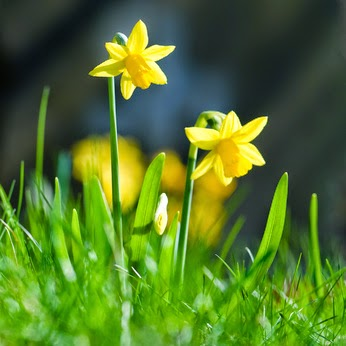 Gartenarbeit im März