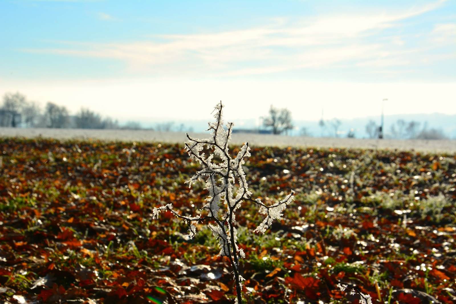 Single tree branch on ground with frost and a blurry view of blue sky