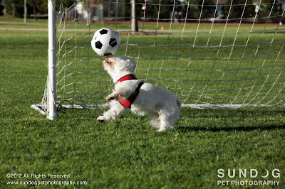 Copyright 2012 Sundog Pet Photography. All Rights Reserved.