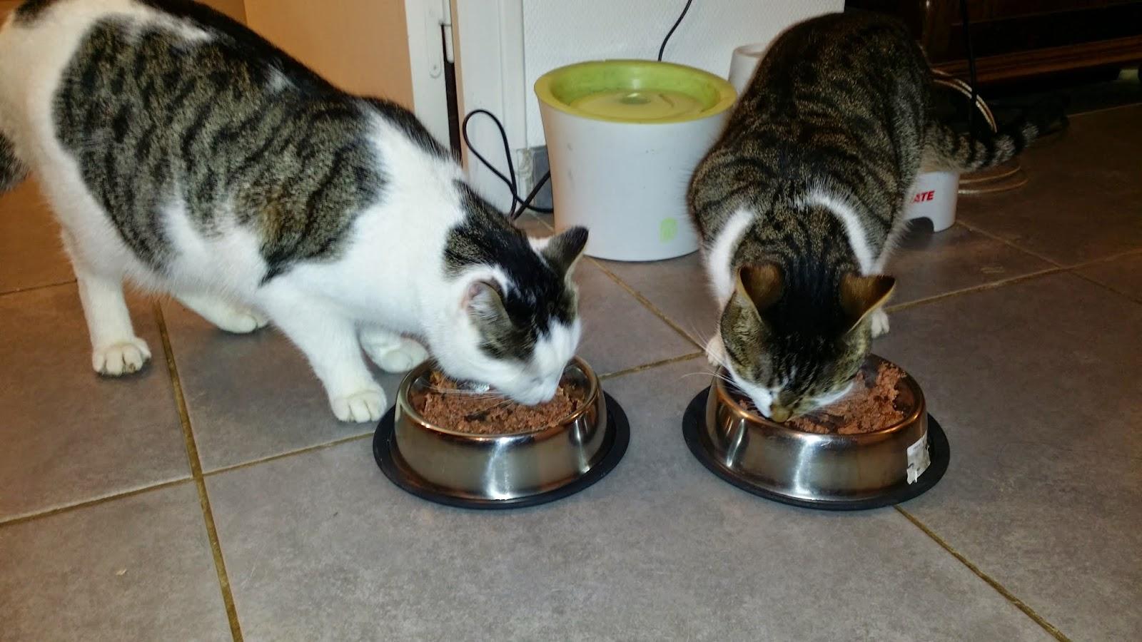 bonnes croquettes pour chat