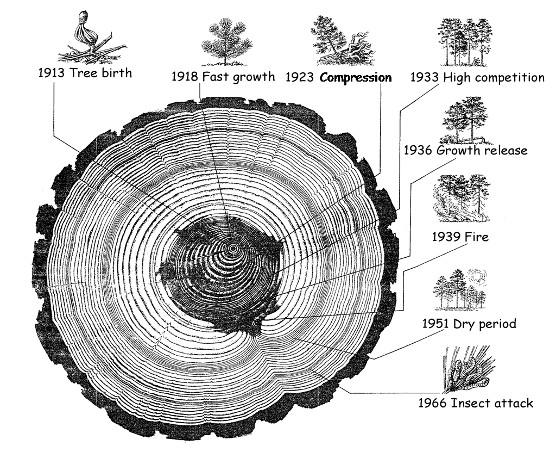 Resultat d'imatges de geocronologia absoluta i relativa