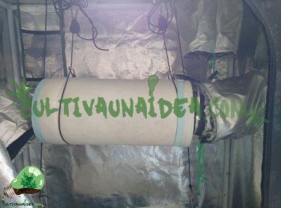 extractor y filtro cultivo marihuana