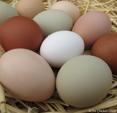 Eggs in nest boxes should be collected frequently to eliminate the opportunity for chickens to eat eggs.