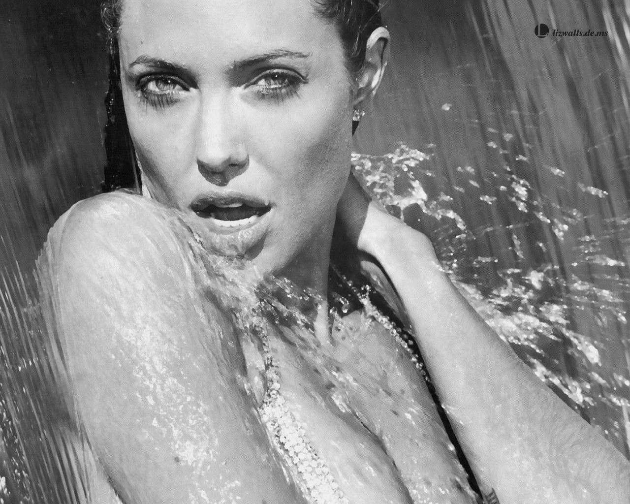 Angelina Jolie Sexy Wallpaper Black And White  Angelina -8971