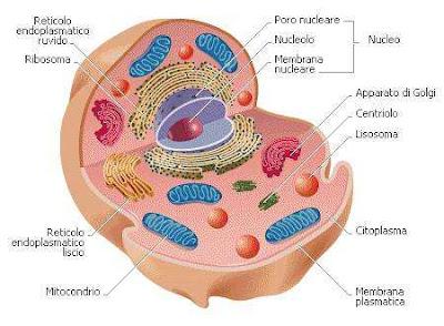 Membrane sintetiche come cellule viventi