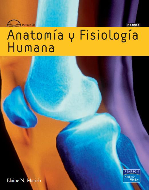 Hermosa Anatomía Fisiología Apr Y Viñeta - Anatomía de Las ...