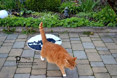 Katze Mimi flüchtet vor dem Spielzeug