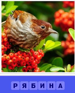птица сидит на кусте с рябиной красного цвета