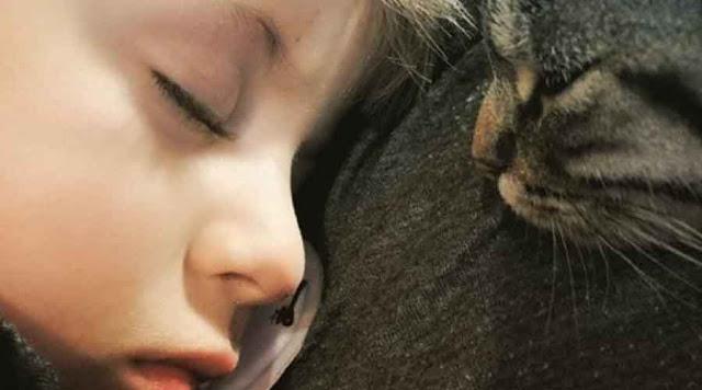 4 Fakta Dan Sifat Yang Dimiliki Cowok Pecinta Kucing