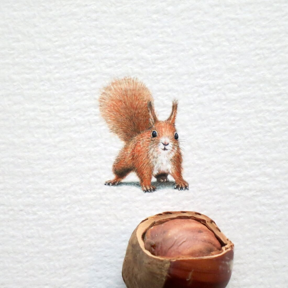 02-Red-Squirrel-Frank Holzenburg Miniature Drawings and Paintings of Animals-www-designstack-co