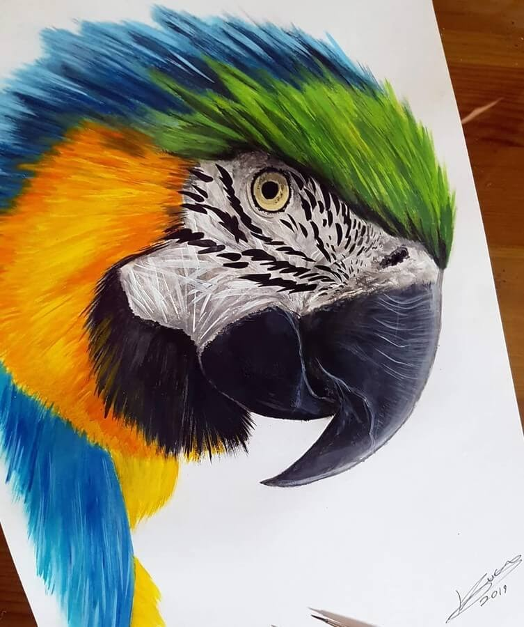 04-Blue-and-Gold-Macaw-Kyle-Duca-Animal-Paintings-www-designstack-co