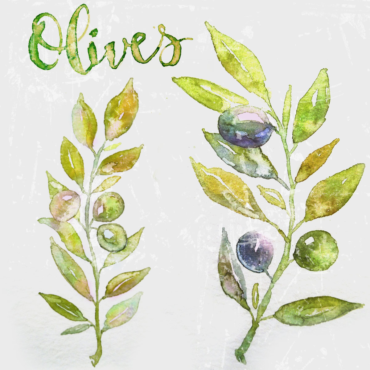 Olive Watercolor image