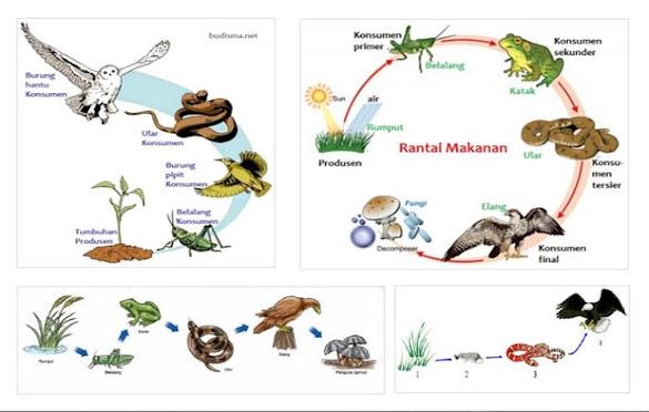 Contoh rantai makanan dari berbagai ekosistem gambar dan penjelasannya 24 contoh rantai makanan dari berbagai ekosistem gambar dan penjelasannya ccuart Gallery