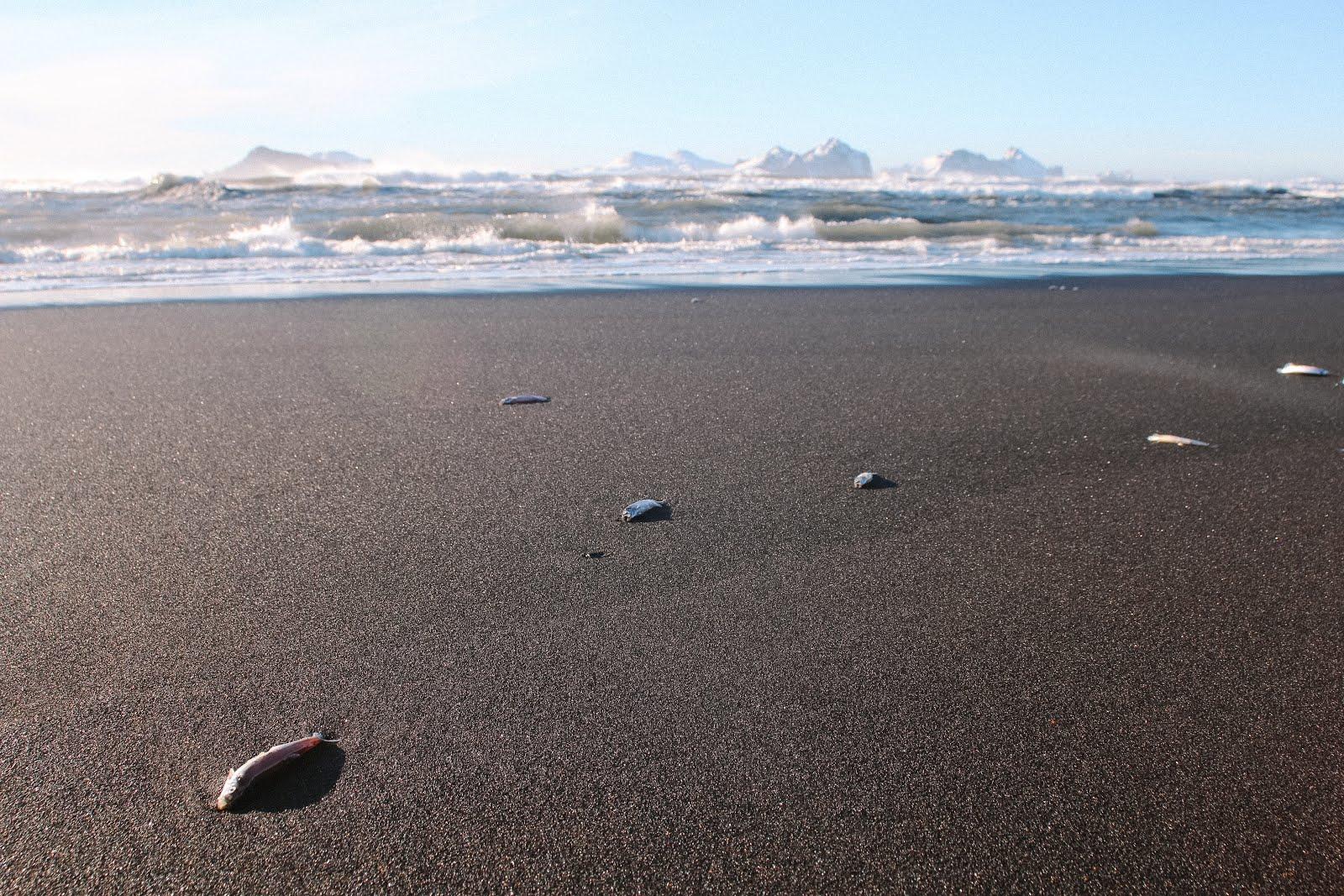 Landeyjahöfn Beach