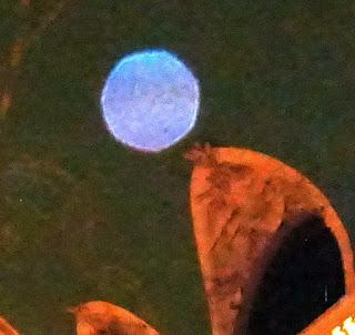 blue purple orb