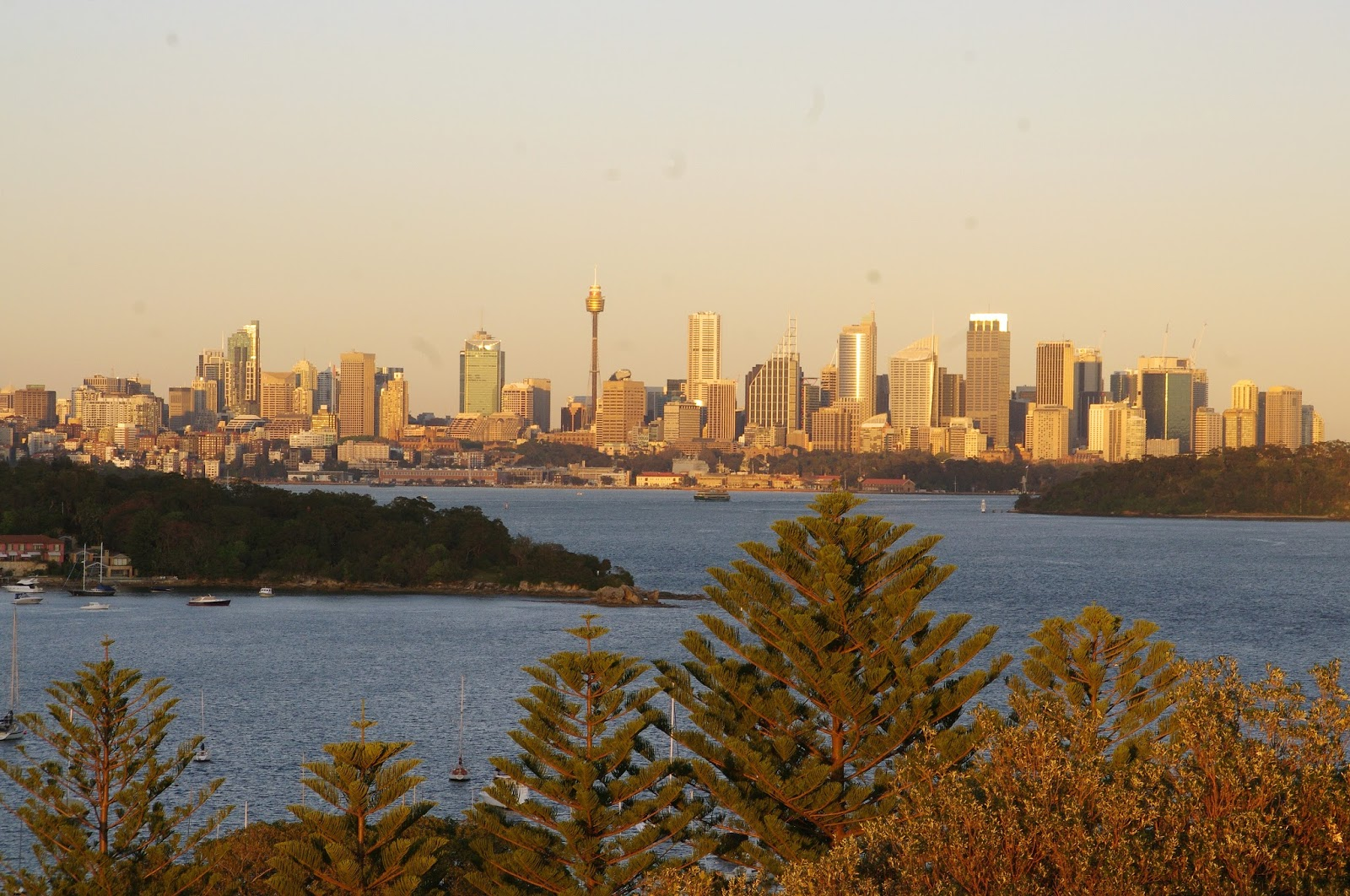 Sydney skyline at sunrise