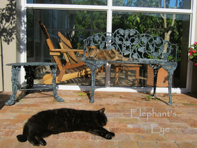 July 2015 Chocolat and Aragon enjoying winter sun in the garden