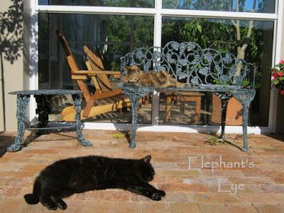 July 2015 Chocolat and Aragon enjoying winter sun in the garden