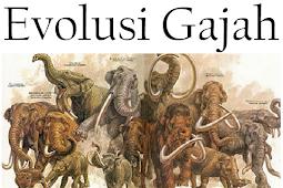 Makalah Evolusi Gajah