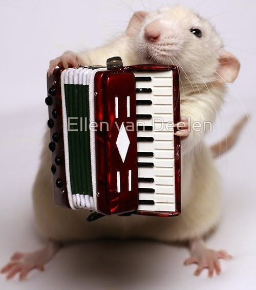 09-The-Accordion-Player-Musical-Dumbo-Rat-Ellen-Van-Deelen-www-designstack-co