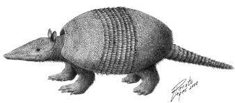 Propraopus