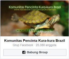 Komunitas Pencinta Kura-kura Brazil