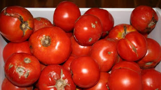 Firm moves to end reliance on imported tomatoes 3
