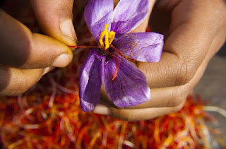 Yến chấm huyết và Saffron.
