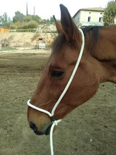 Coussane camargue sur cheval