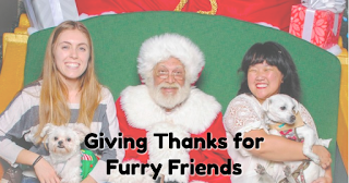 Giving Thanks for Furry Friends (c) the Joyous Living