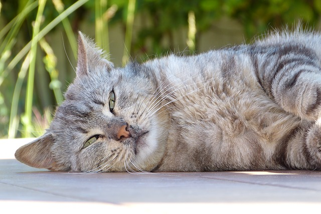 Fur Everywhere How To Relieve Cat Stress