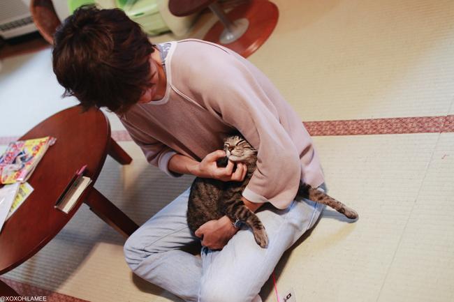 保護猫カフェ ネコリパブリック 猫 ネコ ねこ ネコカフェ