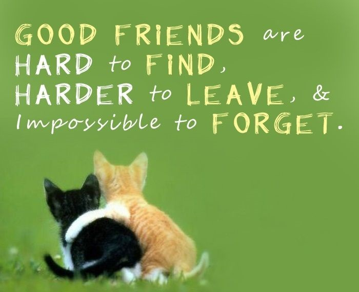 Friendship Messages & Quotes ~ Best Quotes and Sayings