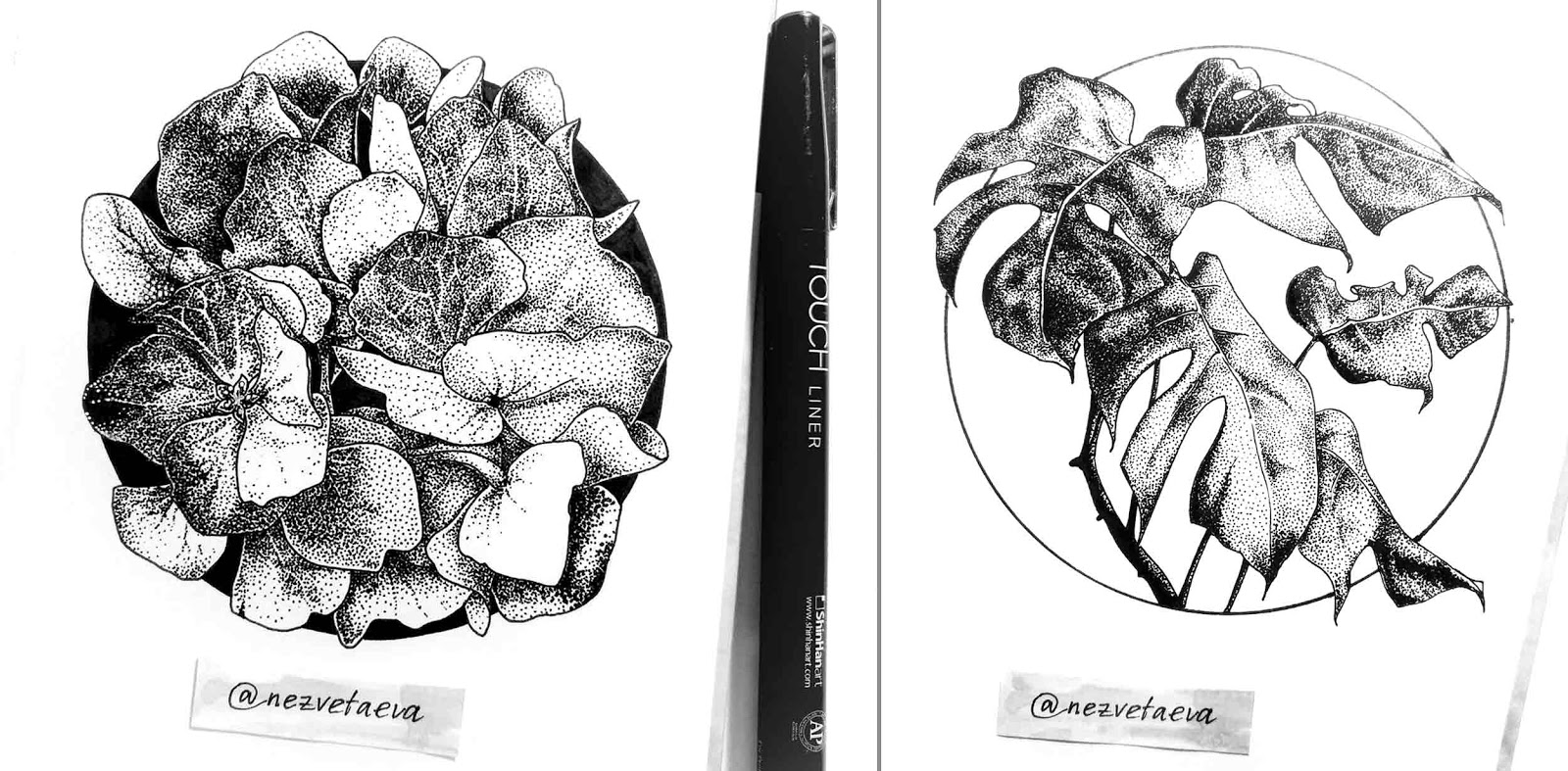 Sonia nezvetaeva, marker sketch, flower illustration, Hydrangea, Monstera, , ink, dotwork, pointillism