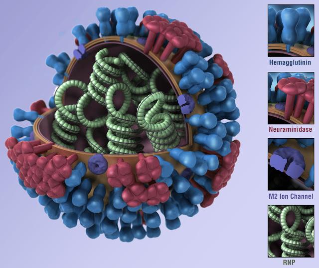 CDC H1N1 Flu