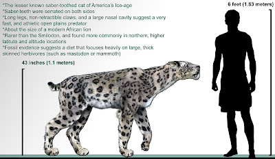 Illustration of Homotherium cat next to human male. The cat stands over a meter tall at the shoulder.