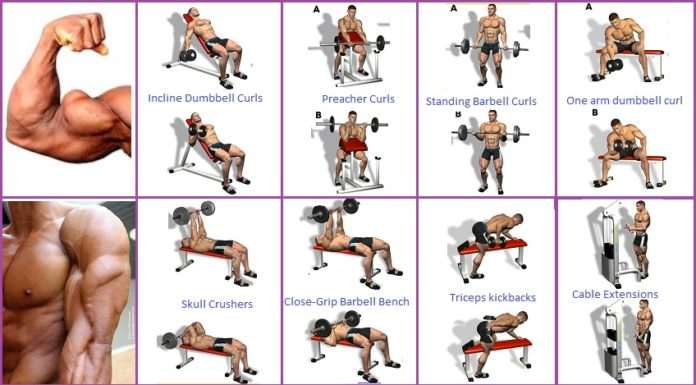 Exercises To Build Biceps At Home Without Weights