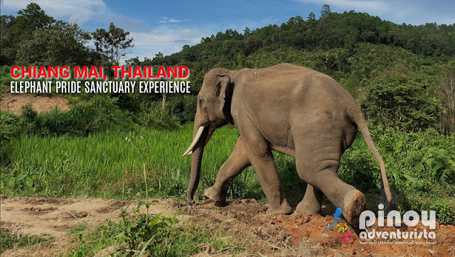 Elephant Pride Sanctuary Experience in Chiang Mai Thailand