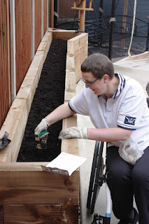 Me in my wheelchair, planting potatoes