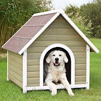 Kapısında beyaz bir köpek yatan köpek ahşap köpek kulubesi