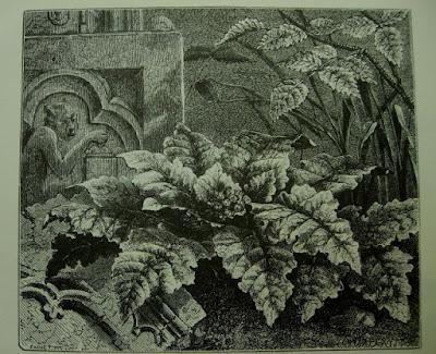 magie, livre, Lyon, Shiva, plante, Saône, Fourvière, plante séchée,
