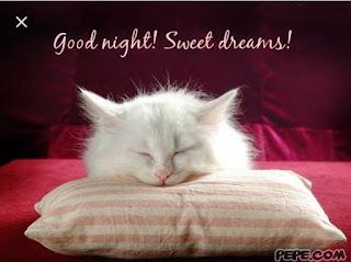 Sweet Dream wish image with cute pushy