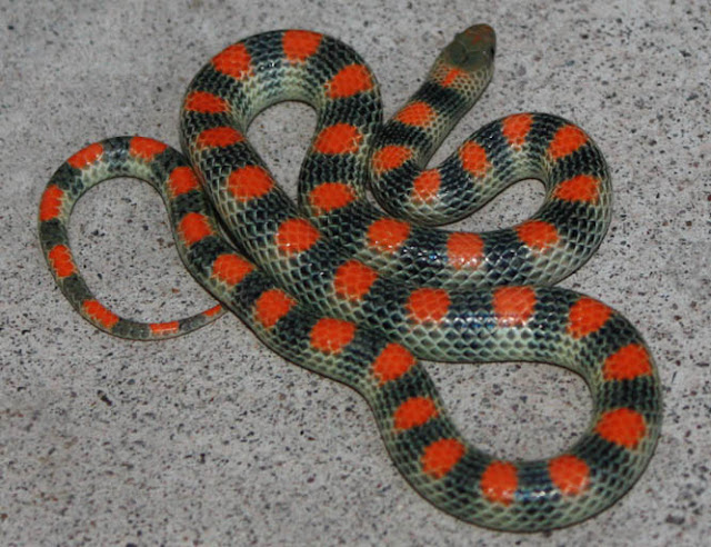 Serpentes em Las Vegas