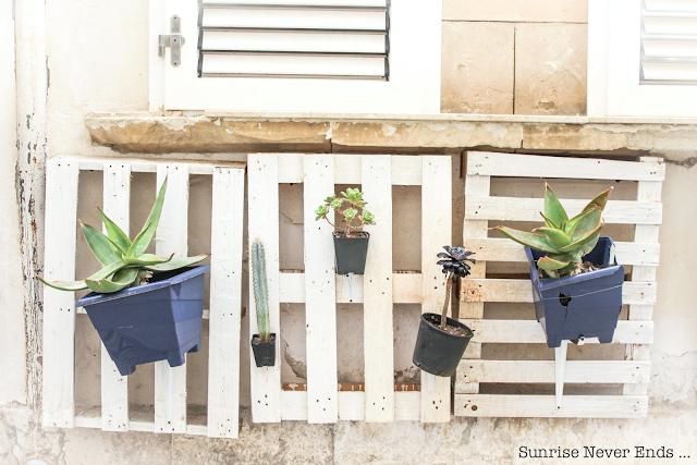 syracuse,ortigia,sicile,plantes vertes,succulentes,cactus,idée déco,déco,vieux quartier juif